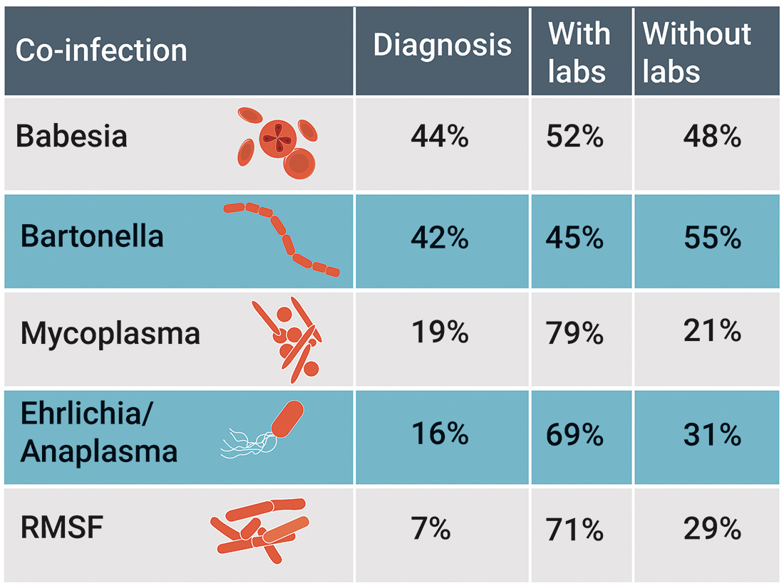 Co-infections are common in persistent Lyme disease