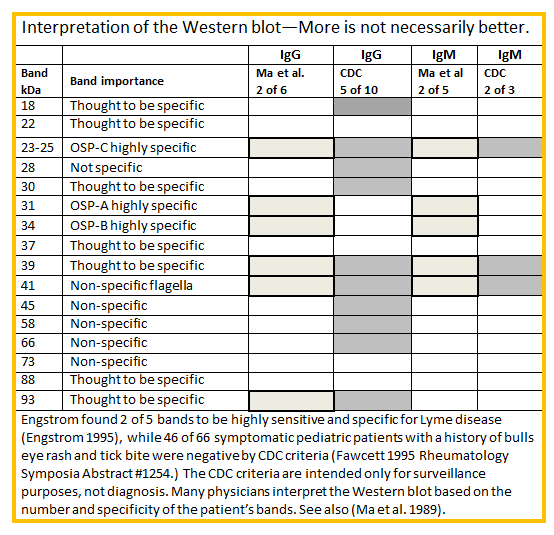 Lyme Disease Western Blot Test Interpretation