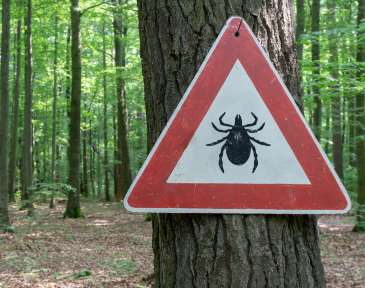 Forests are a prime location for ticks
