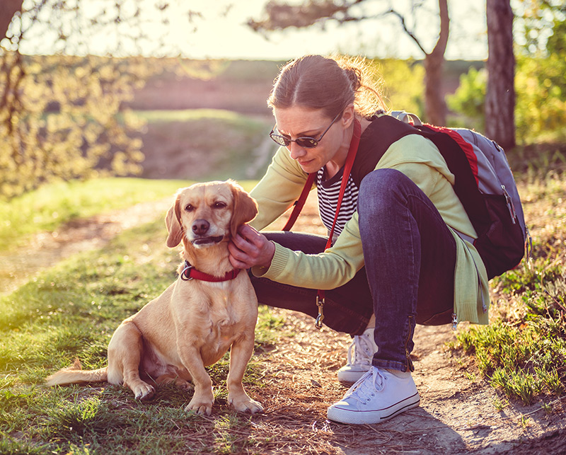 Check your pets for ticks to protect yourself from Lyme disease