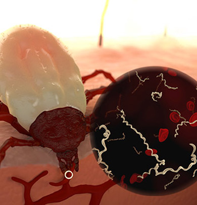 Read Ticks Can Transmit Multiple Infections in a Single Bite