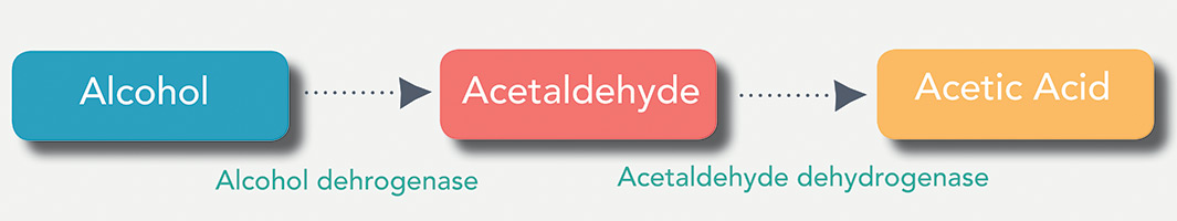 Disulfiram inhibits the enzyme acetaldehyde dehydrogenase