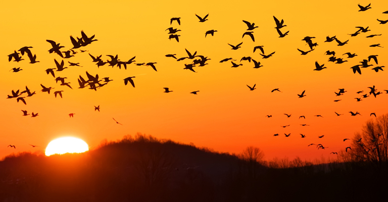 Migrating Birds Play Huge Role in Distributing Ticks Around the World