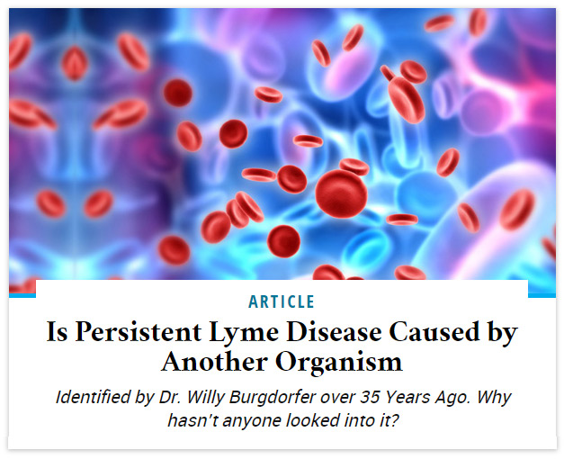 Is Persistent Lyme Disease Caused by Another Organism