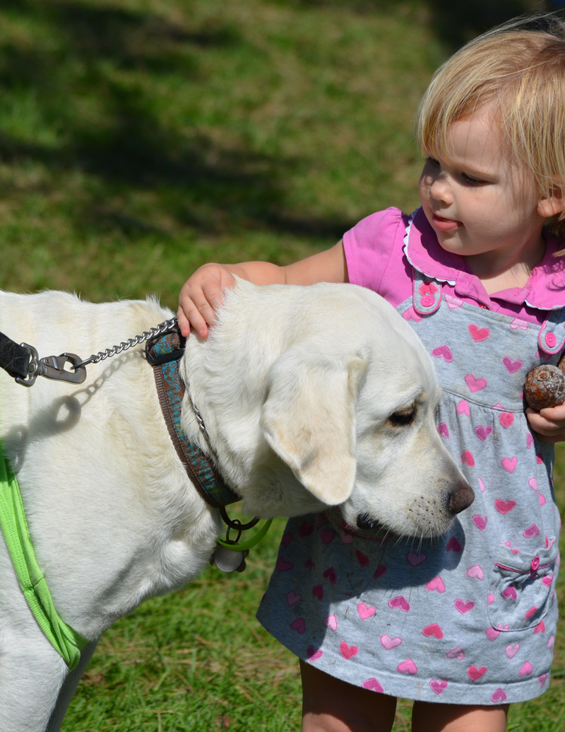 Pets and Lyme disease