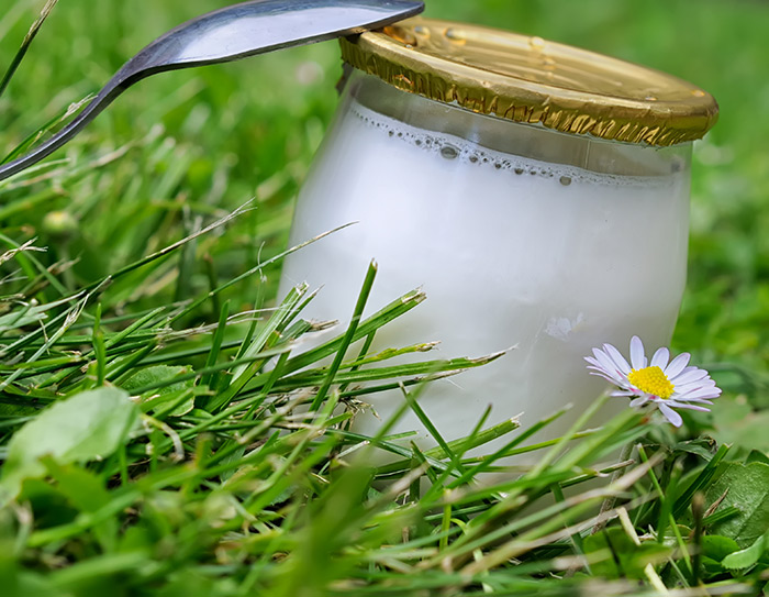 probiotic is bacteria commonly found in yogurt and other fermented foods