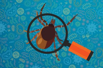 New Tests to Identify All Bacteria in Ticks