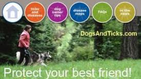 dogsandticks_681540555
