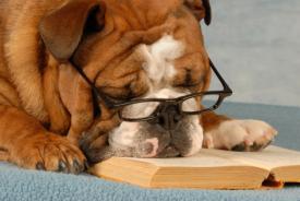 dog__liz_article_244524183