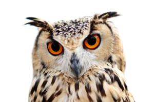 owl XSmall