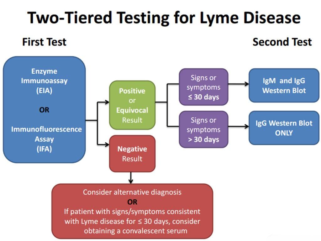 Lyme disease test