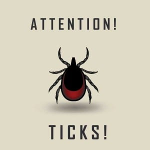 What is the role of Rickettsia Helvetica in Lyme disease?