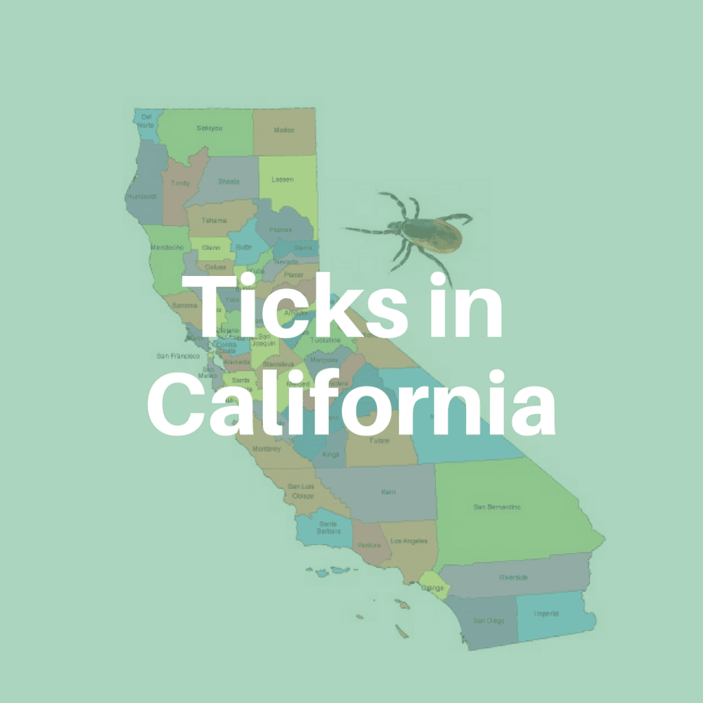 Ticks in California