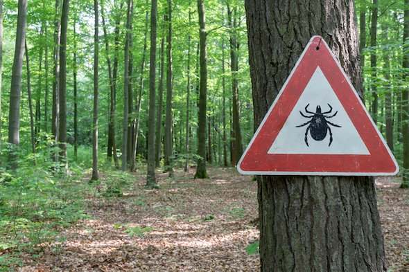 """In the battle against Lyme disease, the ticks are winning."""