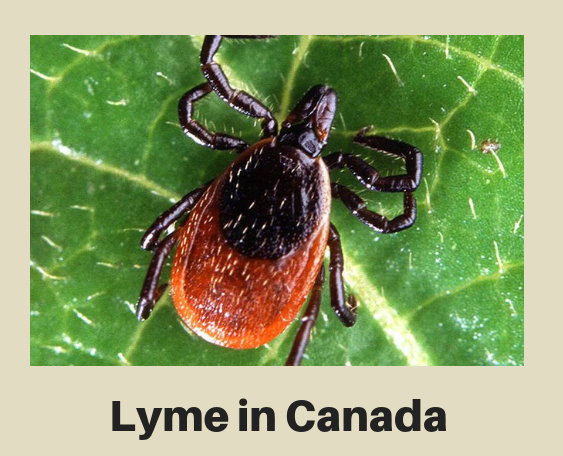 Lyme in Canada
