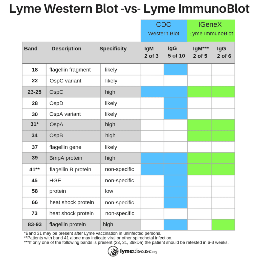 Chart comparing Western blot with Lyme ImmunoBlot