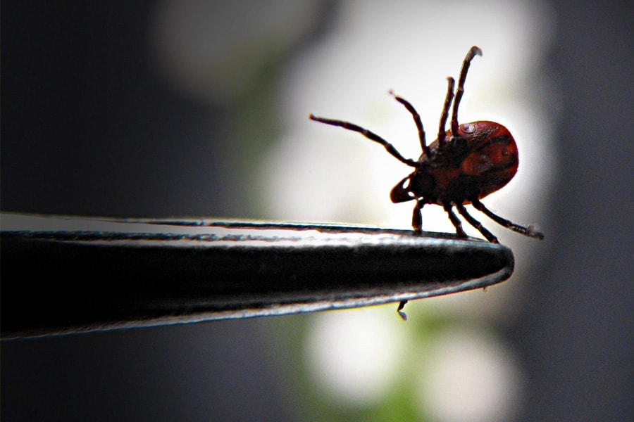 Lyme Disease Predicted To Rise In U.S. as Climate Warms