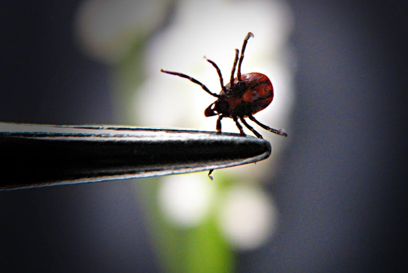 Tick, James Delingpole writes about Lyme disease in UK
