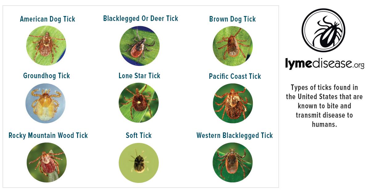 About Ticks and Lyme Disease | Lymedisease org