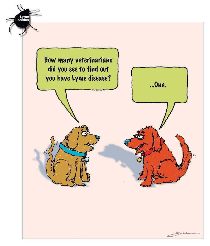 Lyme loonies dog