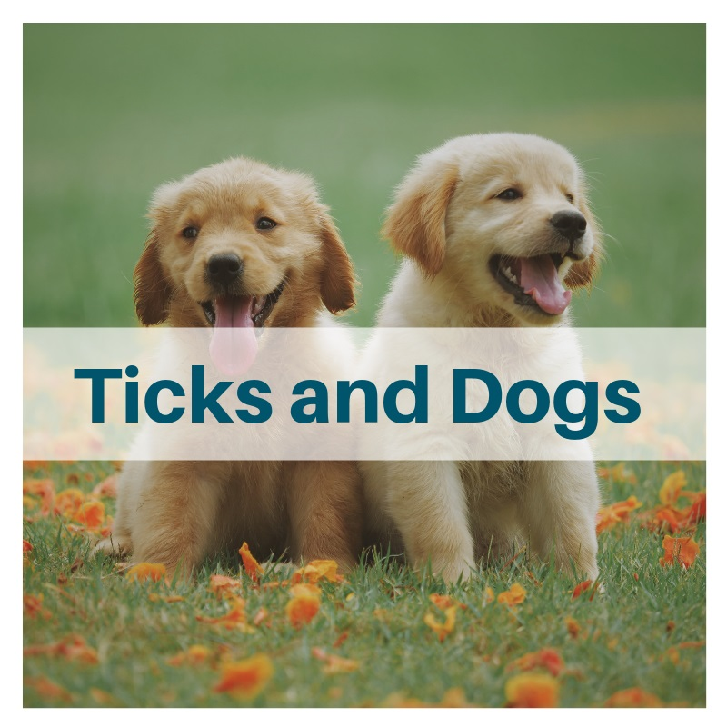 how to protect your dog from tick diseases