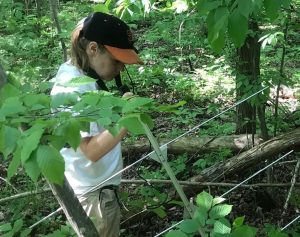 Where ticks go after blood meal Lyme