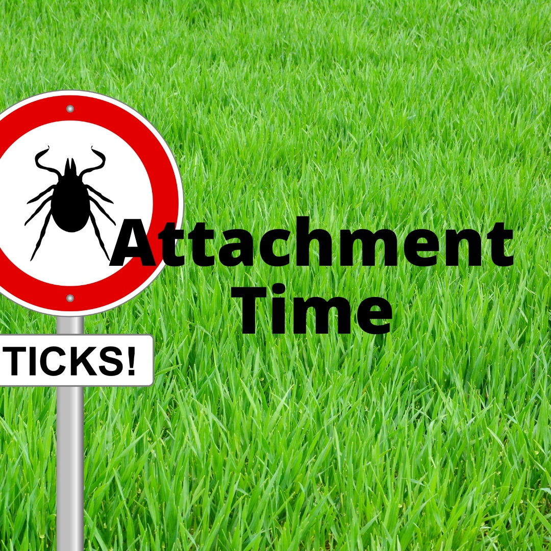 No Safe Tick attachment time