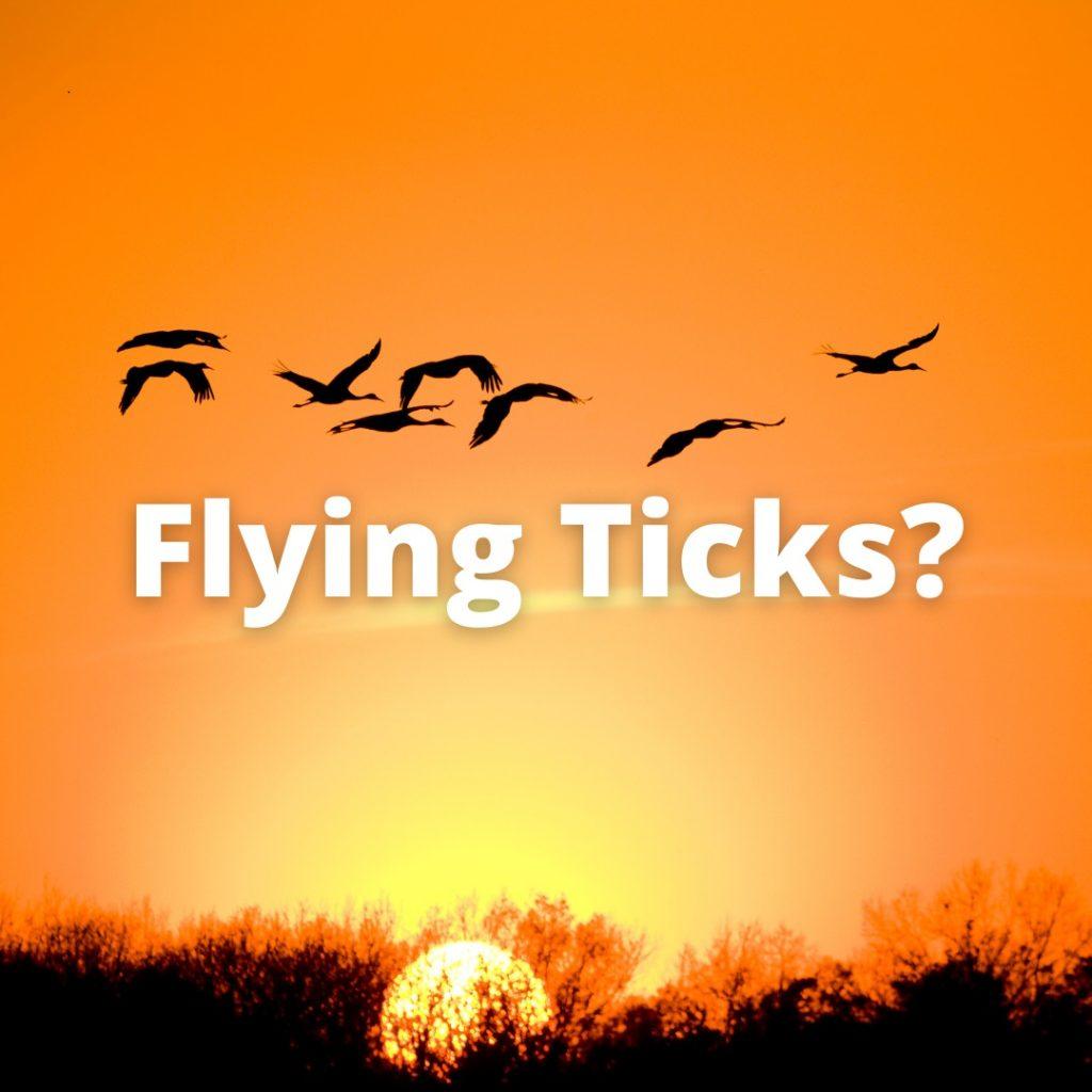 Flying ticks