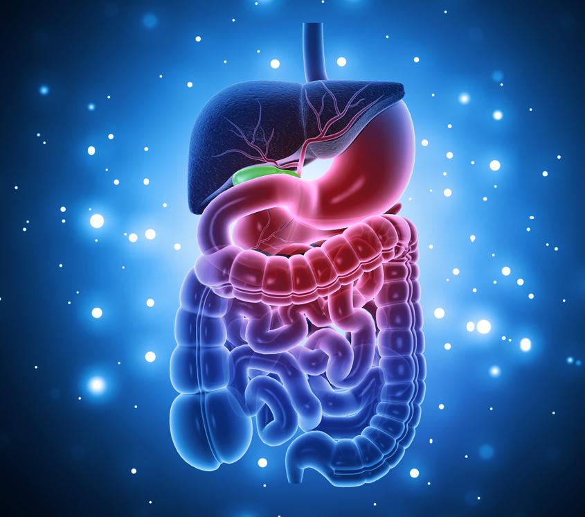 gut-chronic-lyme
