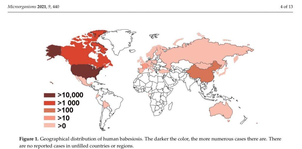 Babesia world map